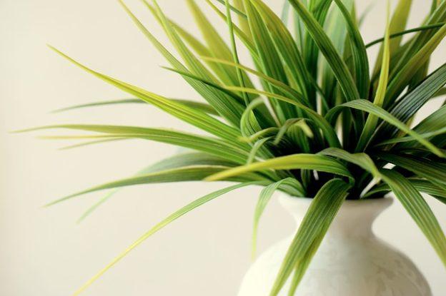Come avviare coltivazioni indoor professionali
