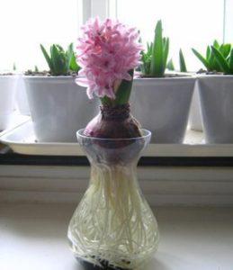Vendita vasi vetro ingrosso